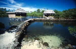 Samoa - laguna delle tartarughe