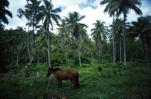 Samoa - verso il monte Matavanu