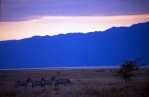 Tanzania - zebre e tramonto