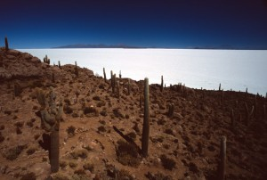 Bolivia - Salar - Isla de los Pescadores