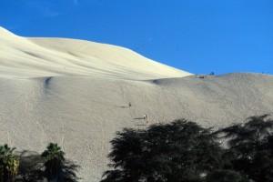Peru - Ica - le dune