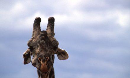 A rischio la biodiversità del Masai Mara