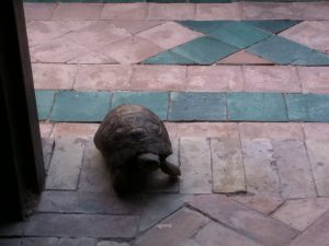 Marocco - Marrakech - the turtle
