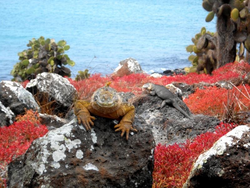 Galapagos articolo