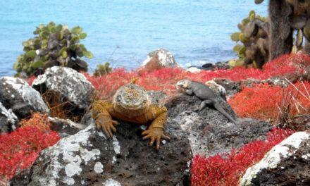 Galapagos – Ecuador 2013. Il viaggio del viaggio sognato da sempre.