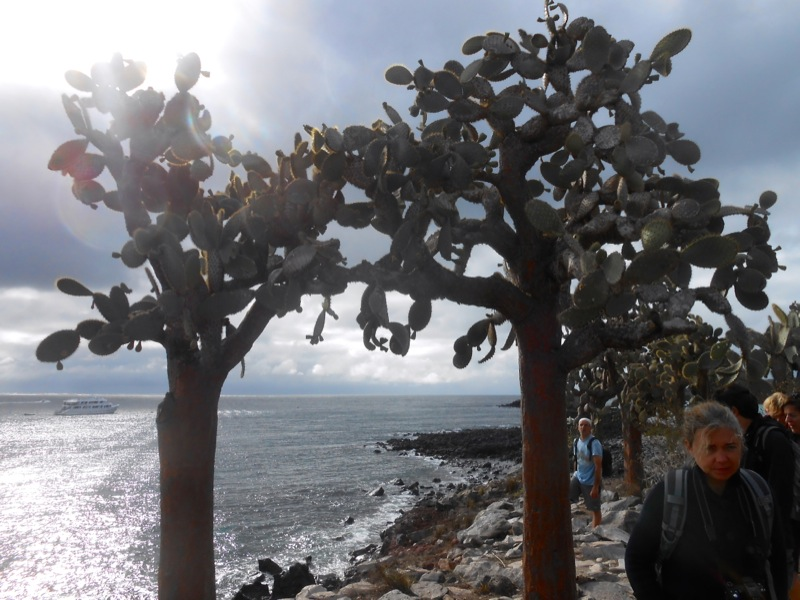 alberi preistorici