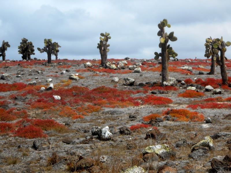 rocce piante rosse