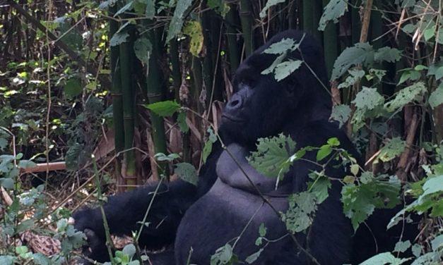 Congo – Virunga National Park