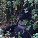 Rwanda Congo 2014