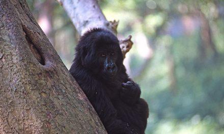Immagini Rwanda Congo
