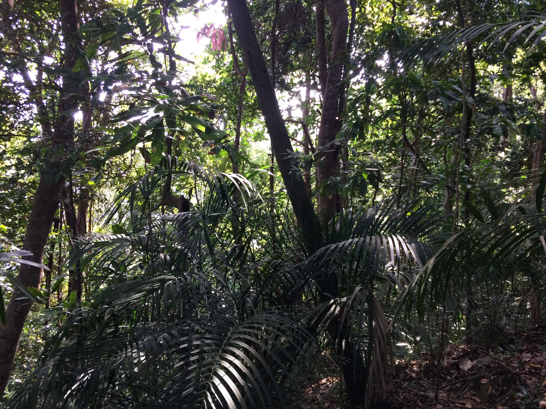 IMG 3769 - Perenthian island. Lovely paradise