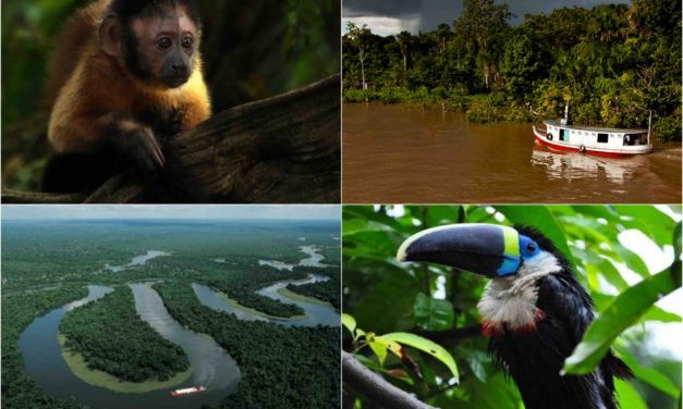 Our next trip – summer 2016 – Amazon river and rainforest!