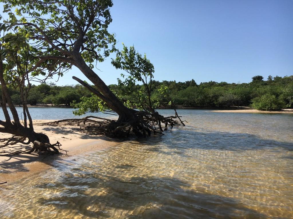 img 7350 1 1024x768 - Amazzonia 4: Alter do Chao - 31 agosto 2 settembre