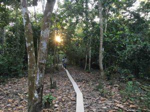 Sentiero amazzonico