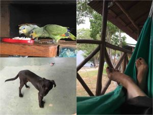 Rio Preto da Eva - me, parrots, Negao