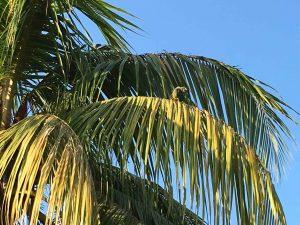 Loro - pappagallo - ferito