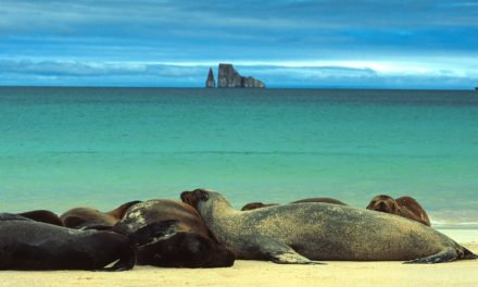 Photos of Galapagos and Ecuador