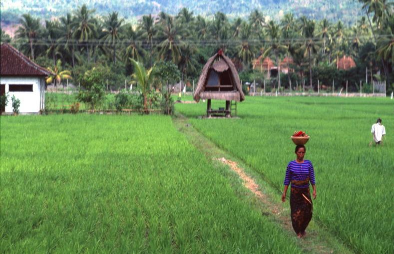 indonesia I 28 - Indonesia 2001