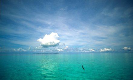 Blue Hole Belize – Caye Caulker