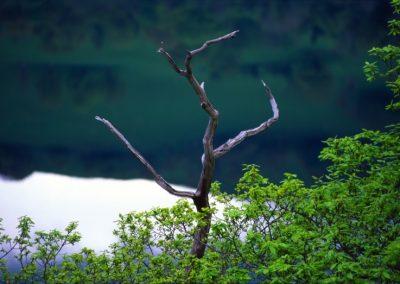 Dead Tree - Wales