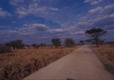 Inside Serengeti National Park - Tanzania