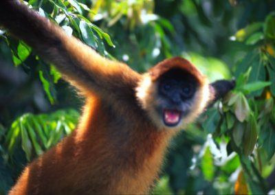 Monkey in Las Isletas - Nicaragua, Central America