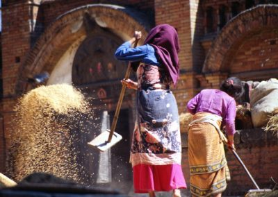 Rice and Women at Work - Nepal