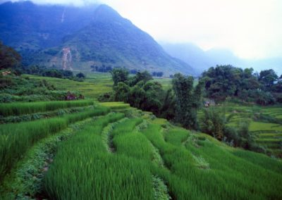 Rice Field in Sapa Valley, Vietnam