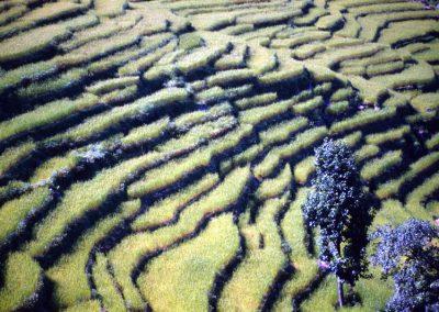 nepal_ii_39
