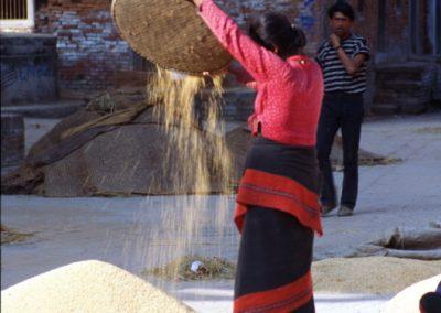 Rice Rain - Nepal