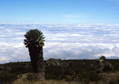 Sea of Clouds - Kilimanjaro Trekking - Tanzania