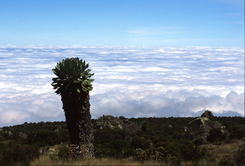 Photos from Tanzania and Kilimanjaro