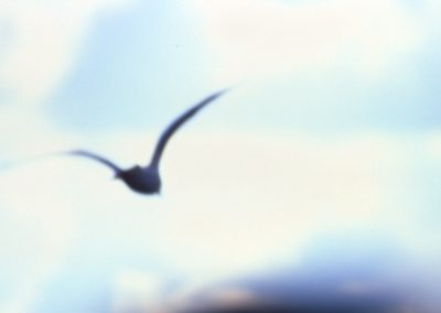 Seagull out of focus - London, England