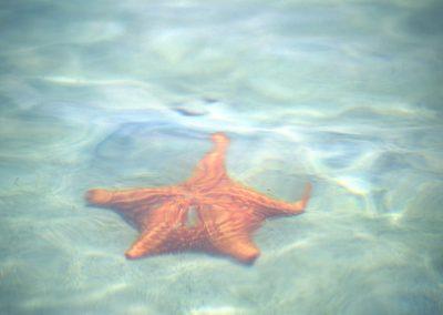 Starfish - Bocas del Toro - Panama, Central America