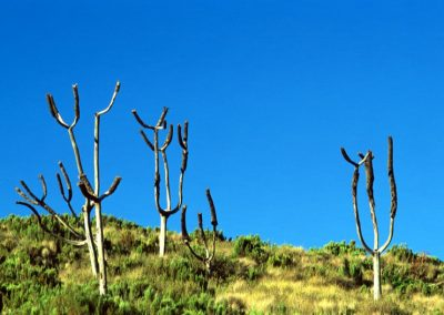 Strange Trees - Kilimanjaro Trekking - Tanzania