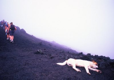 Tired Stray Dog - Trek - Volcano Pacaya - Guatemala, Central America