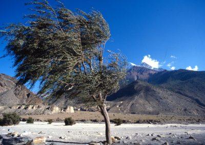 Windy Tree - Nepal