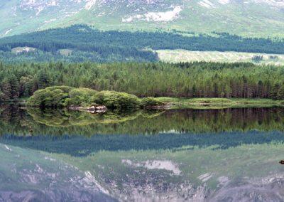 Wood's reflex - Ireland