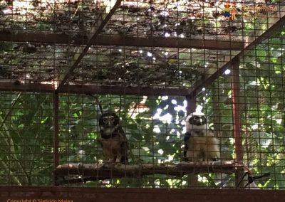 Owls - Jaguar Rescue Center - Puerto Viejo, Costa Rica
