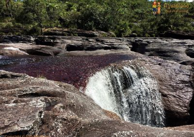 Water - Cano Cristales - La Macarena district, Colombia