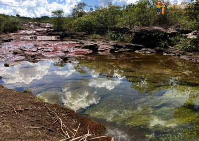 White Clouds in Green and Red - Cano Cristales - La Macarena district, Colombia