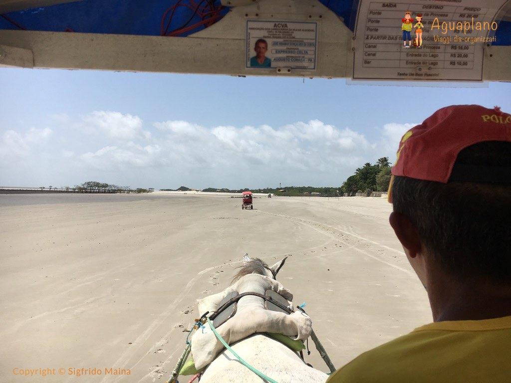 horse cart algodoal brazil - Algodoal, Brazil: an enchanted Island
