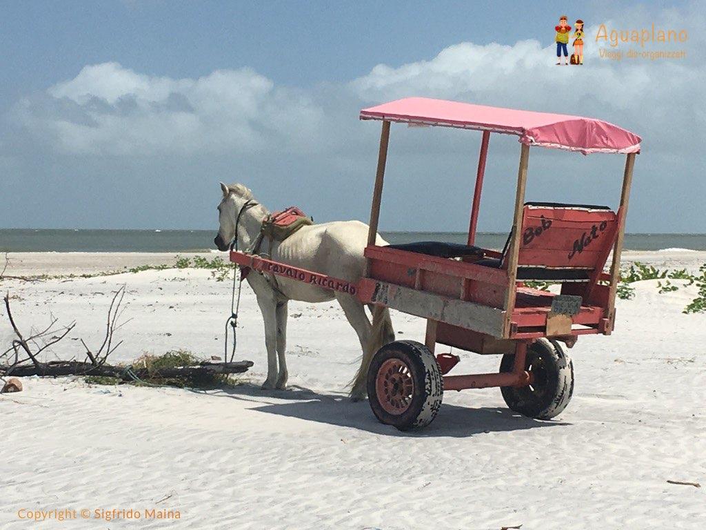 horse cart ricardo algodoal brazil - Algodoal, Brazil: an enchanted Island