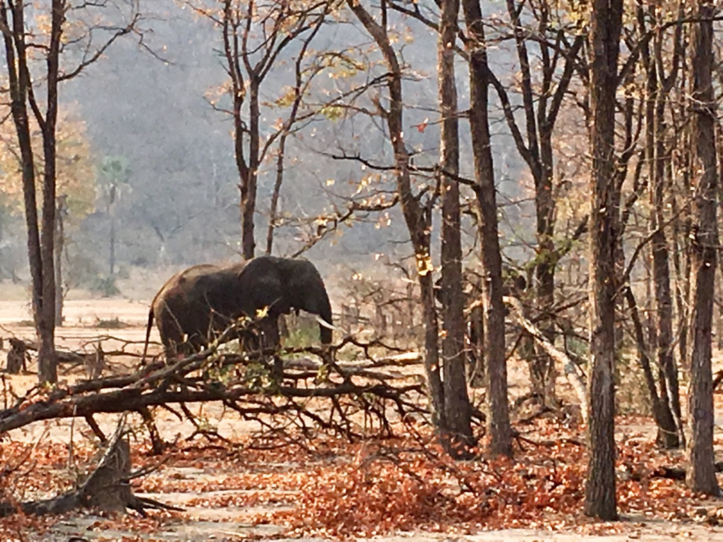 Elephant in Liwonde National Park Malawi - Liwonde National Park Malawi