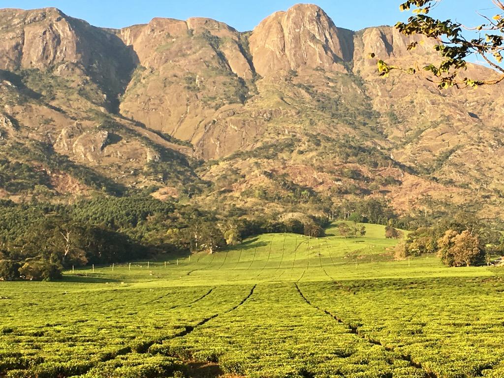 Spectacular View from the Tea Plantations Mount Mulanje Malawi - Trekking in Malawi - The Mulanje Mountains
