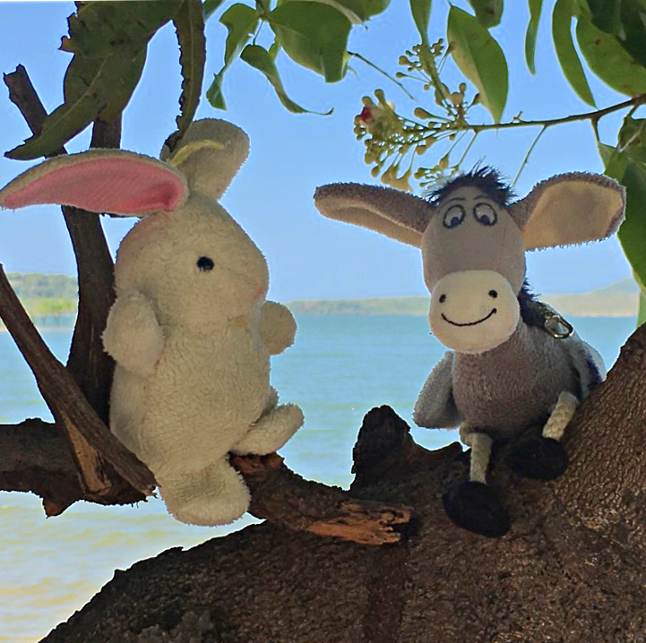 Relax in Alter do Chao 2 - Follow the Donkey and The Rabbit!