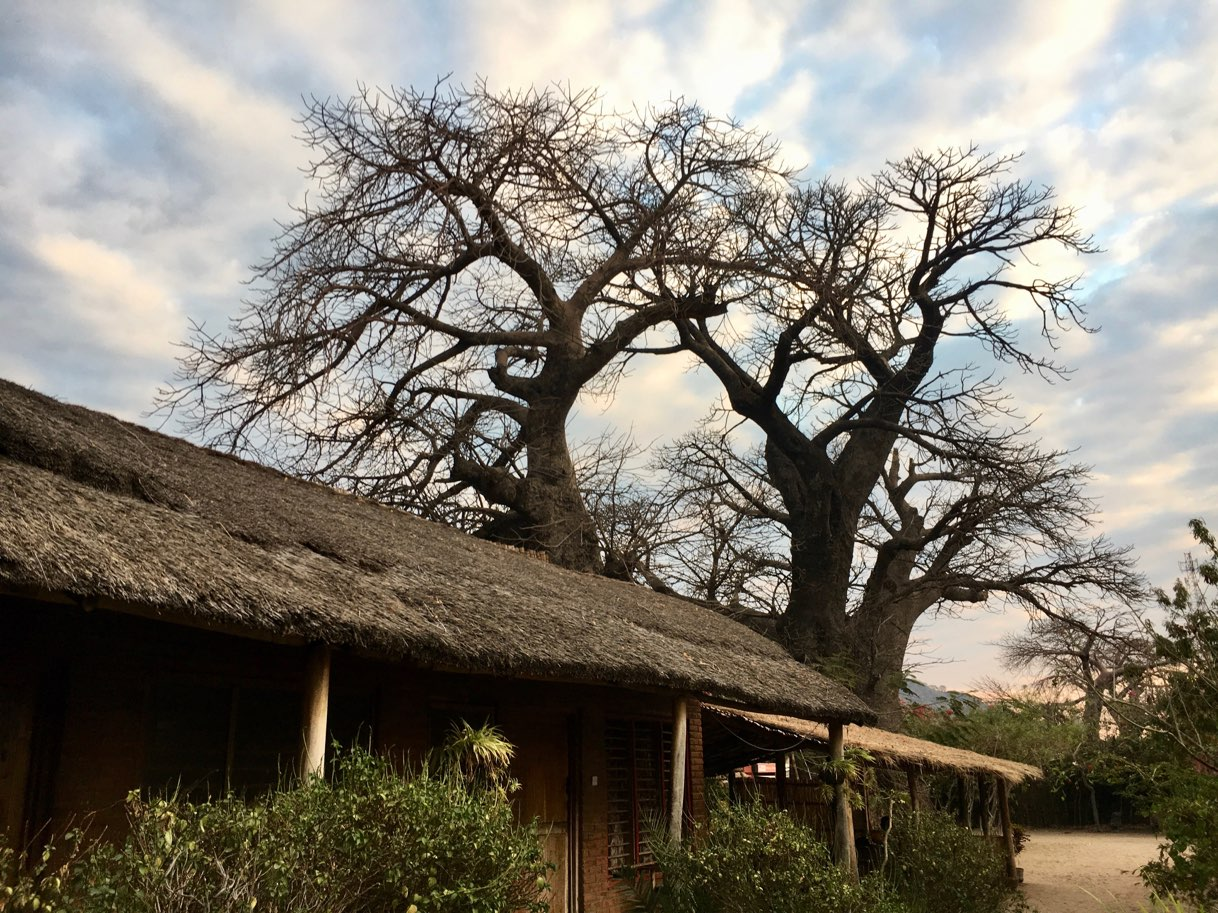 Baobab tree at Malambre Camp Cape Mc Clear Lake Malawi  - Zambia Malawi Mozambico 2018
