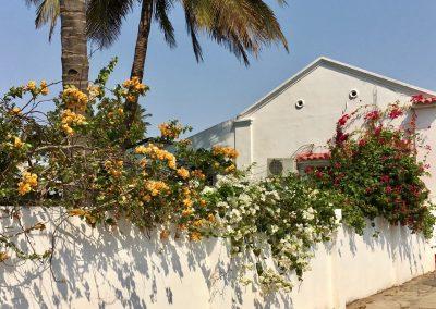 Bouganville - tree colors - Inhambane - Mozambique