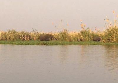 Elephants on the river - Liwonde National Park