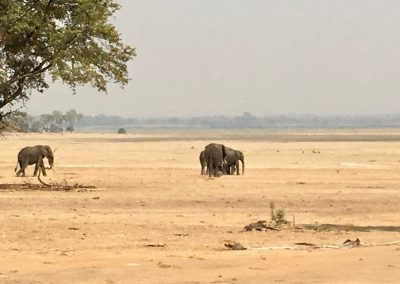 Group of elephants - Liwonde National Park